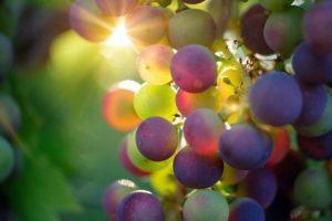 מדריך לאזורי היין בקליפורניה